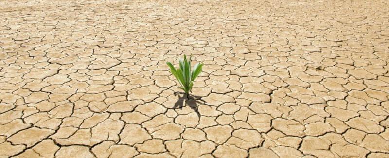 planta-desierto