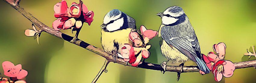 soledad pajaros flores dibujo