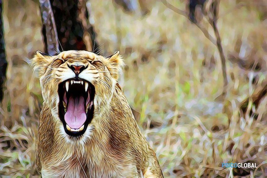leon-enfado-dib